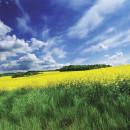Dawson Creek Sustainable Energy