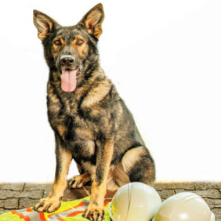drug detective dogs